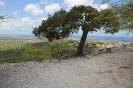 Twizy Tours Roadrunner-Bonaire_6