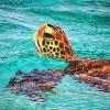 Bonaire & Beach Impressions_20